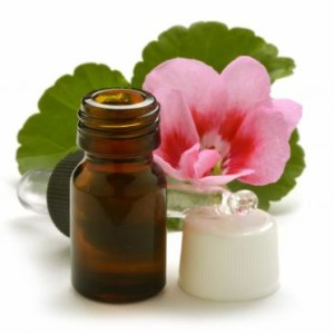 rose geranium oil (1024x678)