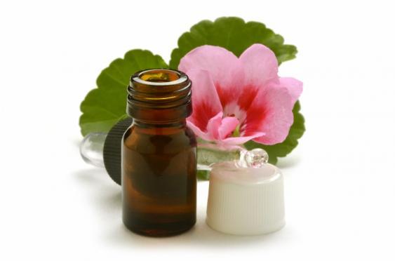 rose geranium oil (1024×678)