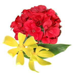 ylang ylang geranium